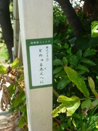 日間賀島33.JPG