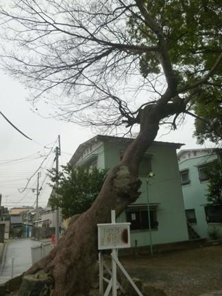 田光八幡社06.JPG