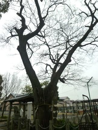田光八幡社20.JPG
